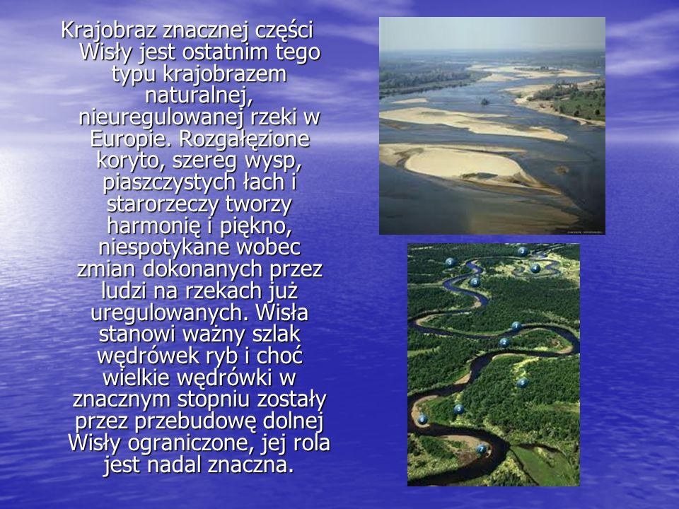 Krajobraz znacznej części Wisły jest ostatnim tego typu krajobrazem naturalnej, nieuregulowanej rzeki w Europie. Rozgałęzione koryto, szereg wysp, pia