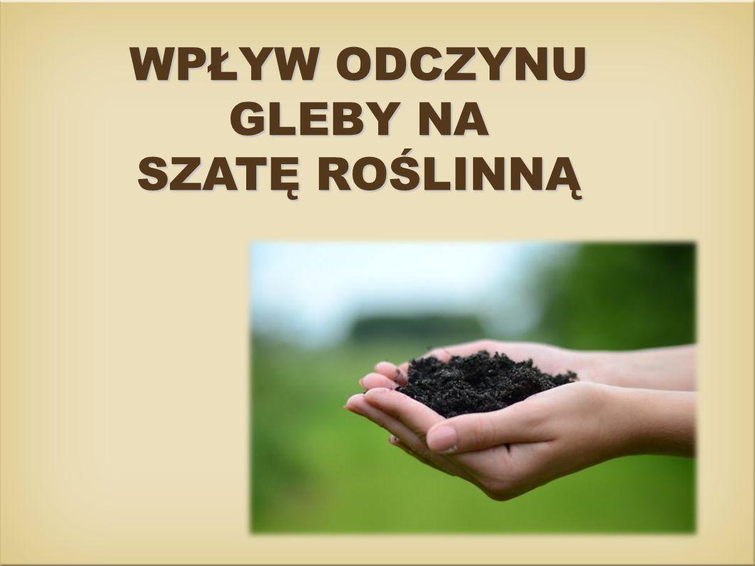 W Polsce przeważają gleby o odczynie kwasowym.Odczyn gleby ma dla roślin duże znaczenie.