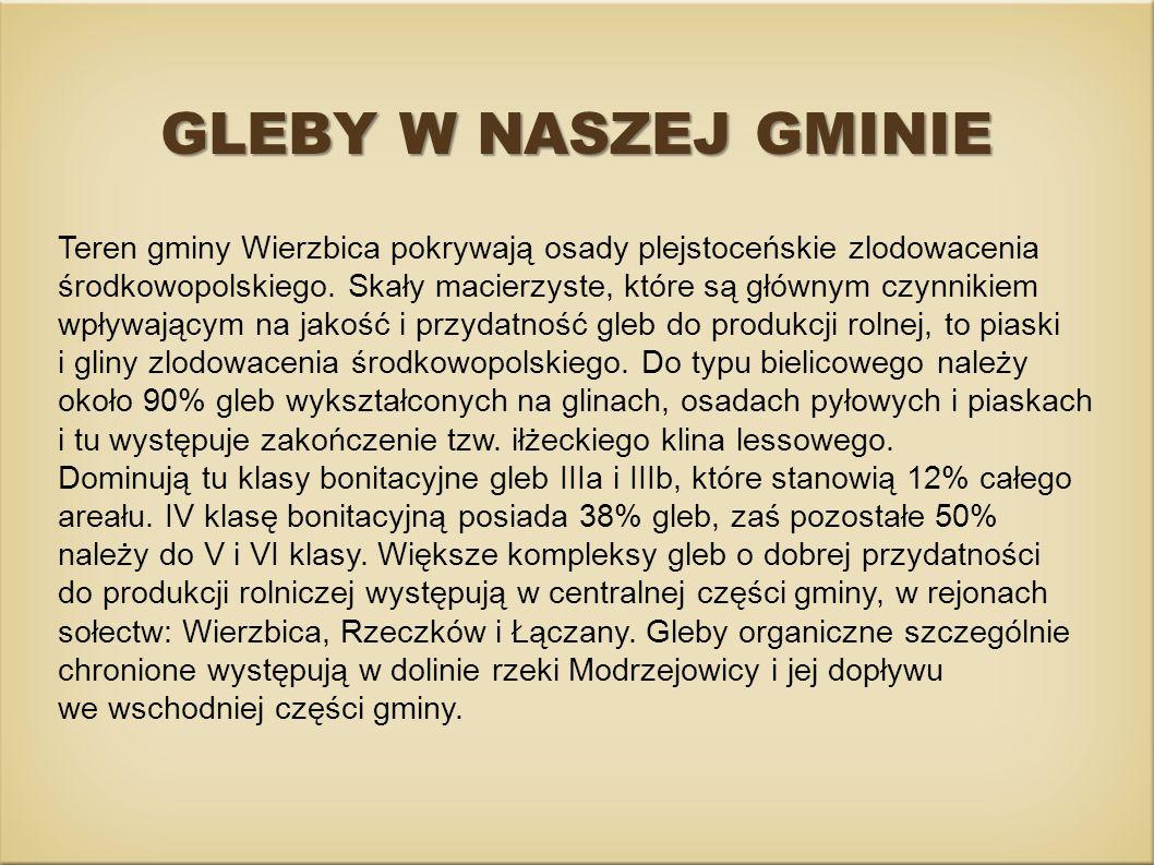GLEBY W NASZEJ GMINIE Teren gminy Wierzbica pokrywają osady plejstoceńskie zlodowacenia środkowopolskiego. Skały macierzyste, które są głównym czynnik