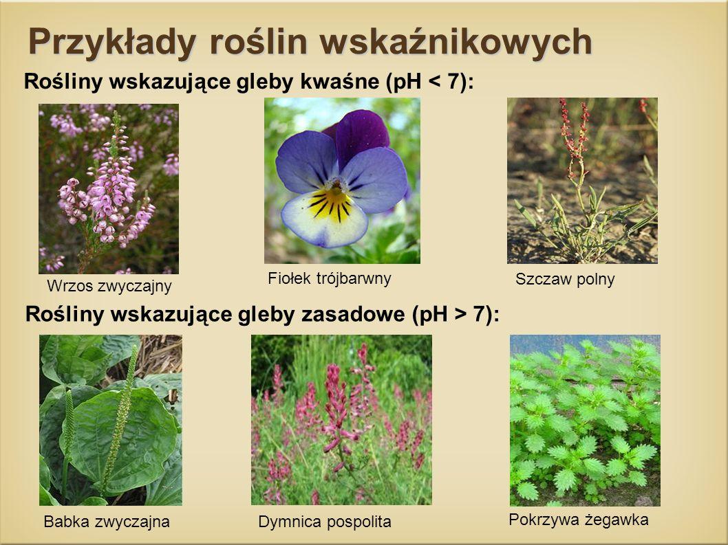 Przykłady roślin wskaźnikowych Rośliny wskazujące gleby kwaśne (pH < 7): Wrzos zwyczajny Fiołek trójbarwny Szczaw polny Babka zwyczajnaDymnica pospoli