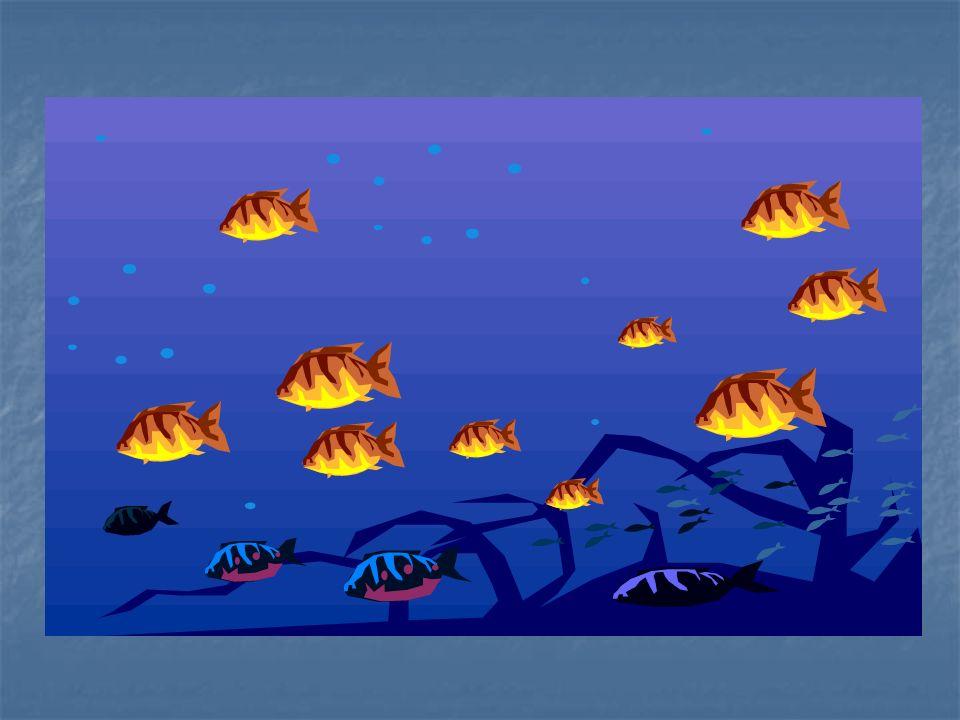 Rozwiązanie: Nabierając powietrze do pęcherza pławnego, ryba zmniejsza swoją gęstość, rośnie jej objętość, a zatem i objętość wypartej wody.