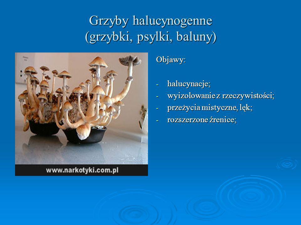 Grzyby halucynogenne (grzybki, psylki, baluny) Objawy: - halucynacje; - wyizolowanie z rzeczywistości; - przeżycia mistyczne, lęk; - rozszerzone źreni