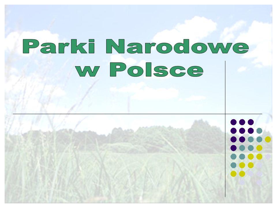 Narwiański Park Narodowy Położenie i powierzchnia Narwiański Park Narodowy leży w północno-wschodniej części Polski w województwie podlaskim.