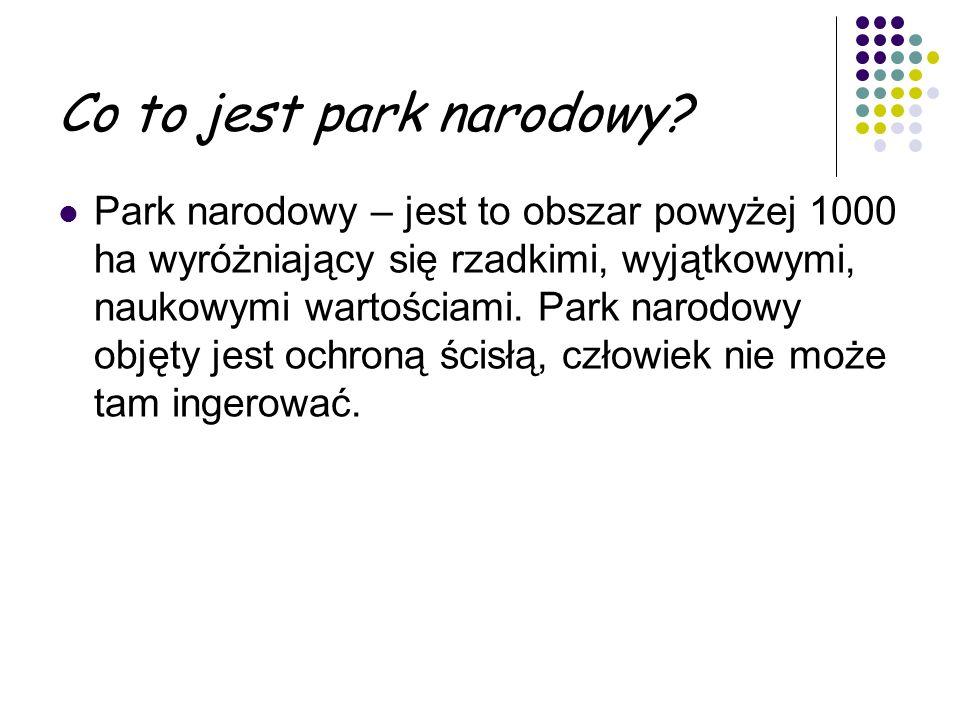 Roztoczański Park Narodowy.