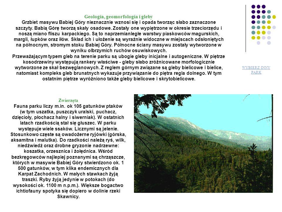 Białowieski Park Narodowy Puszcza Białowieska jest ostatnim naturalnym lasem nizinnym – perłą wśród puszcz starego kontynentu.