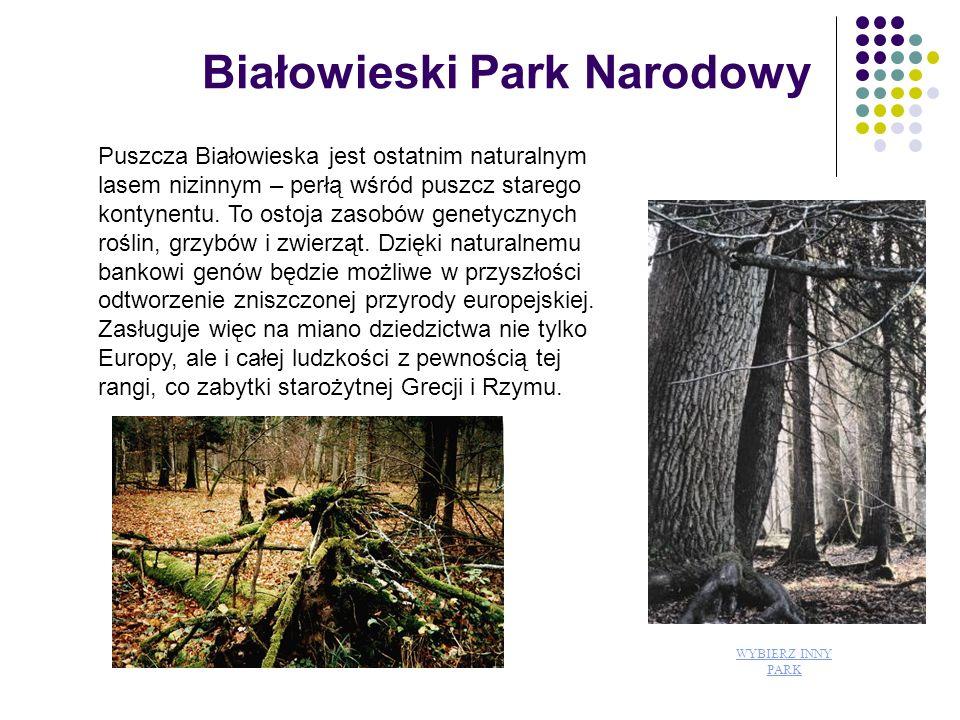 Roślinność Zbiorowiska roślinne na terenie Parku reprezentują wysoki poziom różnorodności biologicznej.