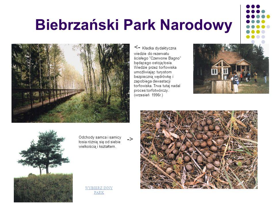 Bieszczadzki Park Narodowy Bieszczadzki Park Narodowy chroni fragmenty wschodnio- karpackiej przyrody w polskiej części Bieszczadów Zachodnich.