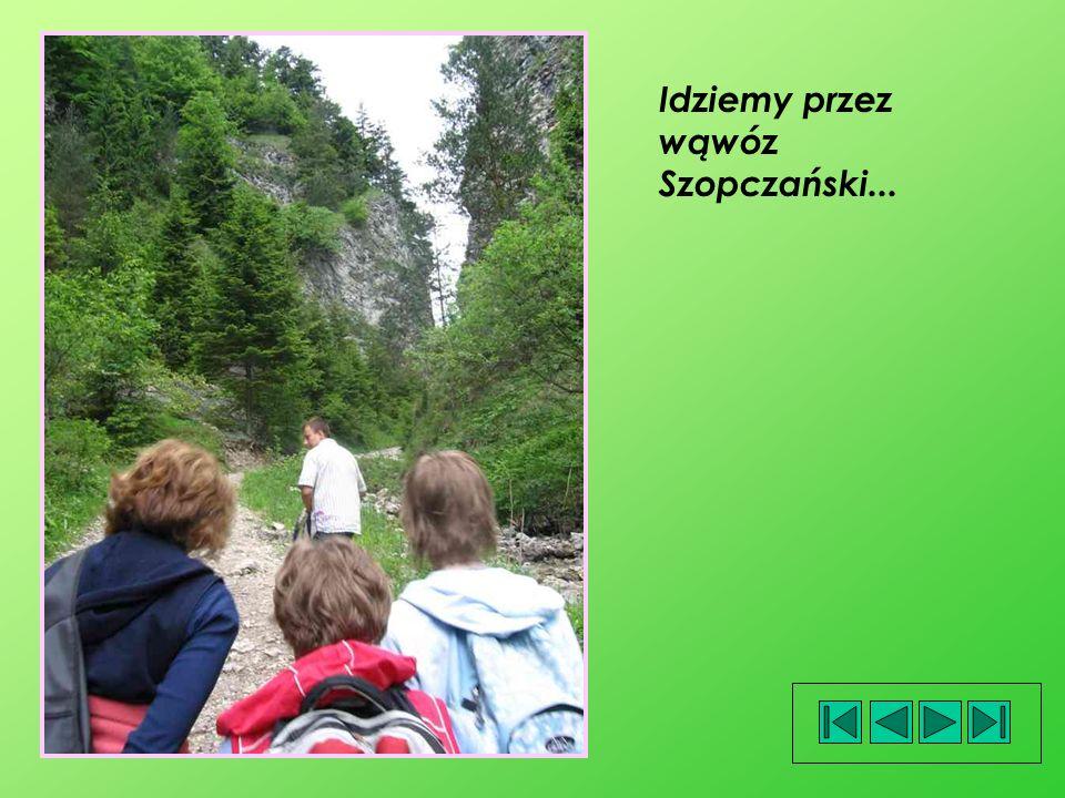 Idziemy przez wąwóz Szopczański...