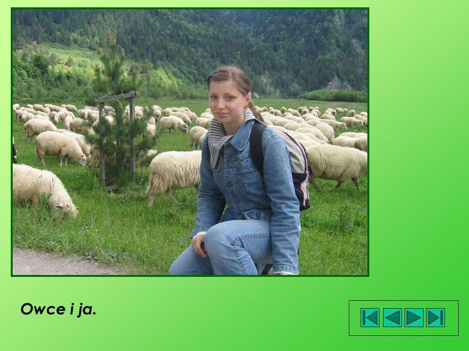 Owce i ja.