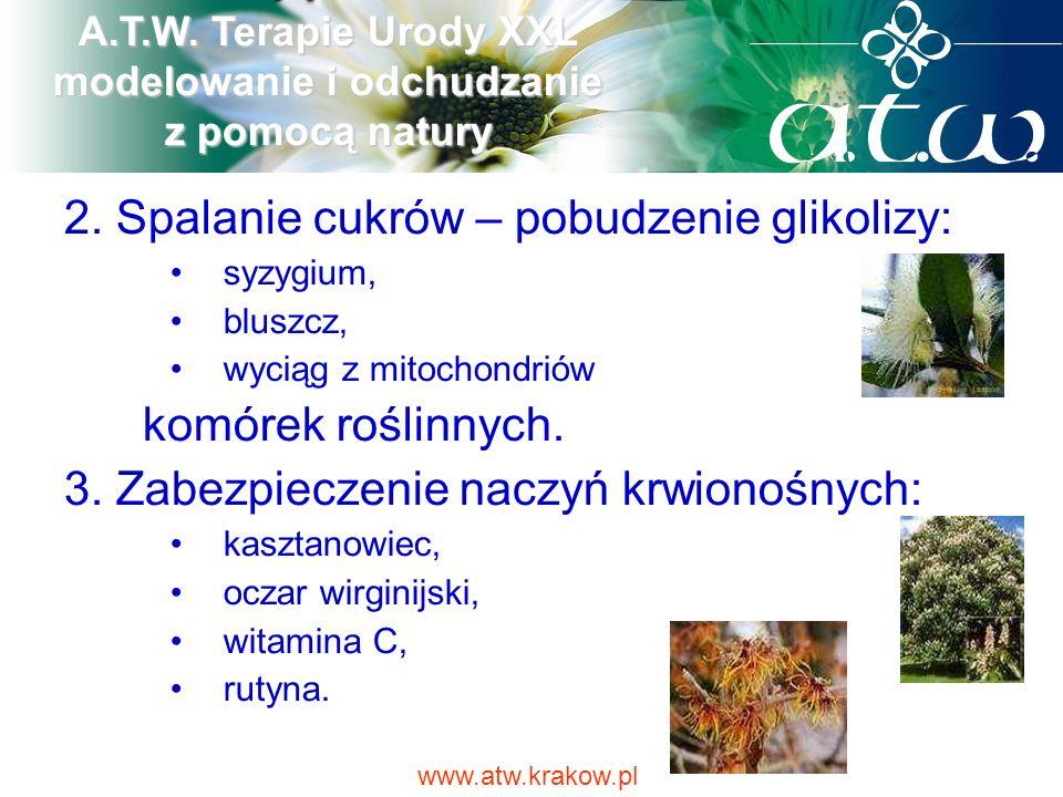 2. Spalanie cukrów – pobudzenie glikolizy: syzygium, bluszcz, wyciąg z mitochondriów komórek roślinnych. 3. Zabezpieczenie naczyń krwionośnych: kaszta