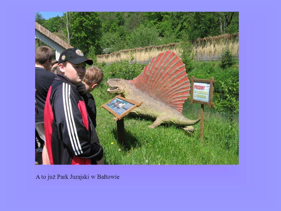 A to już Park Jurajski w Bałtowie