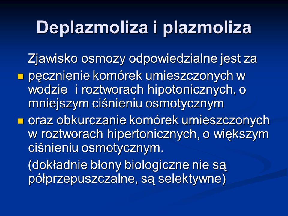 Deplazmoliza i plazmoliza Zjawisko osmozy odpowiedzialne jest za Zjawisko osmozy odpowiedzialne jest za pęcznienie komórek umieszczonych w wodzie i ro