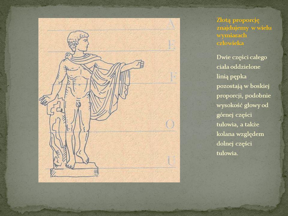 Dwie części całego ciała oddzielone linią pępka pozostają w boskiej proporcji, podobnie wysokość głowy od górnej części tułowia, a także kolana względ
