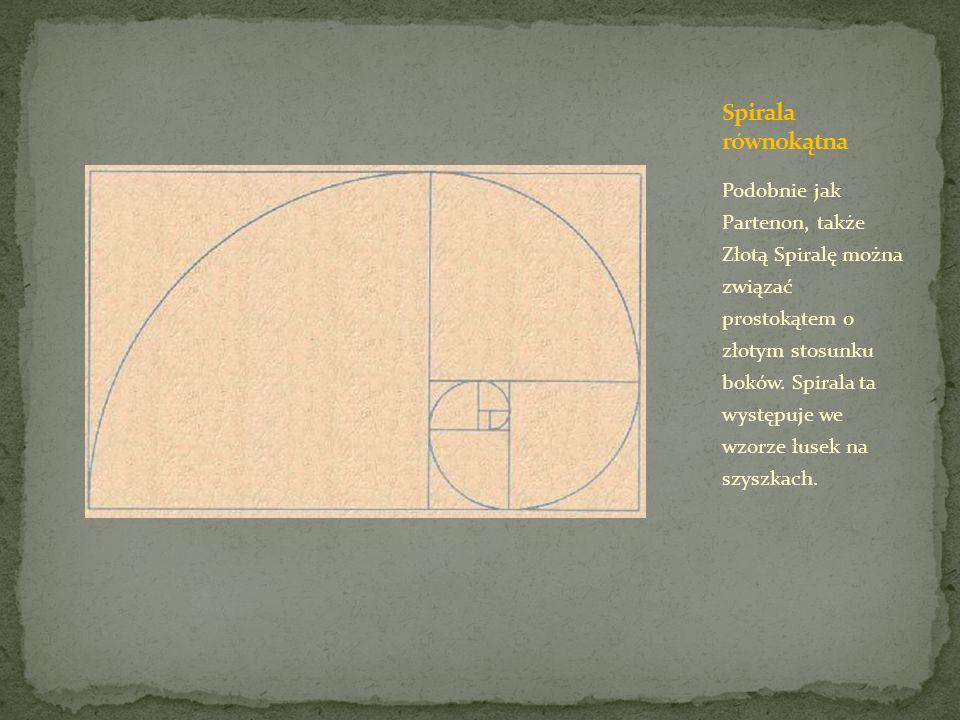 Podobnie jak Partenon, także Złotą Spiralę można związać prostokątem o złotym stosunku boków. Spirala ta występuje we wzorze łusek na szyszkach.