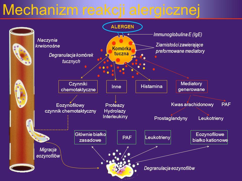 Mechanizm reakcji alergicznej ALERGEN Naczynia krwionośne Degranulacja eozynofilów Inne Immunoglobulina E (IgE) Czynniki chemotaktyczne Histamina Medi