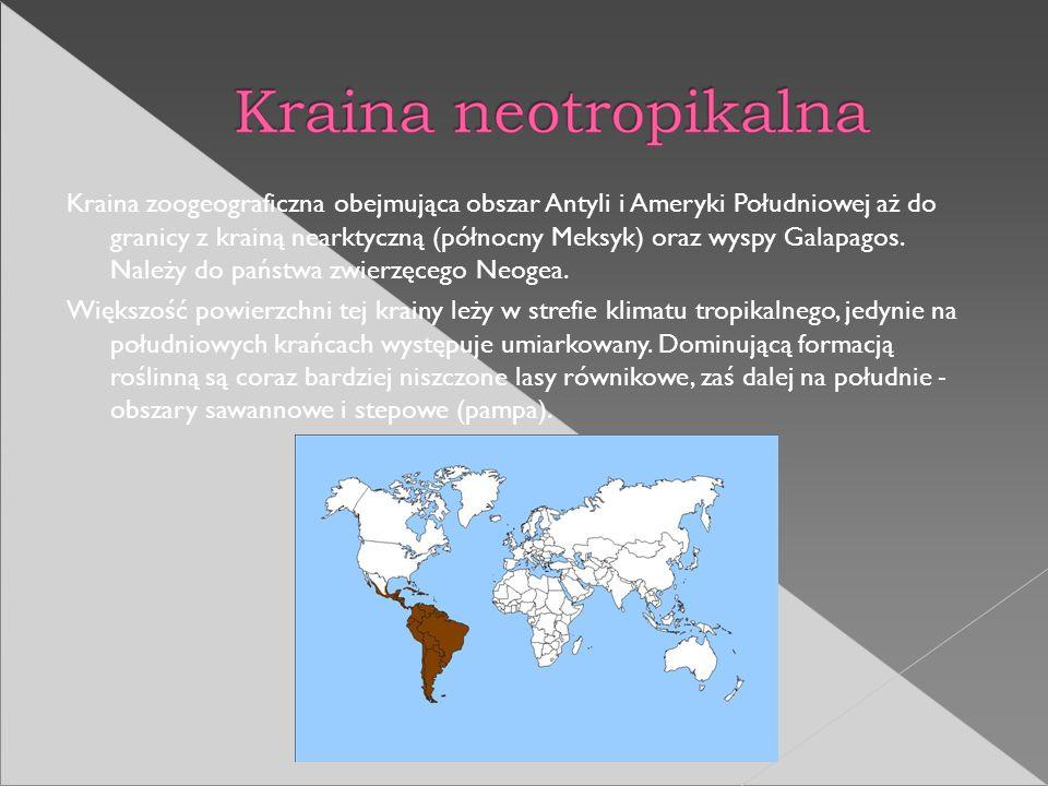 Kraina zoogeograficzna obejmująca obszar Antyli i Ameryki Południowej aż do granicy z krainą nearktyczną (północny Meksyk) oraz wyspy Galapagos. Należ