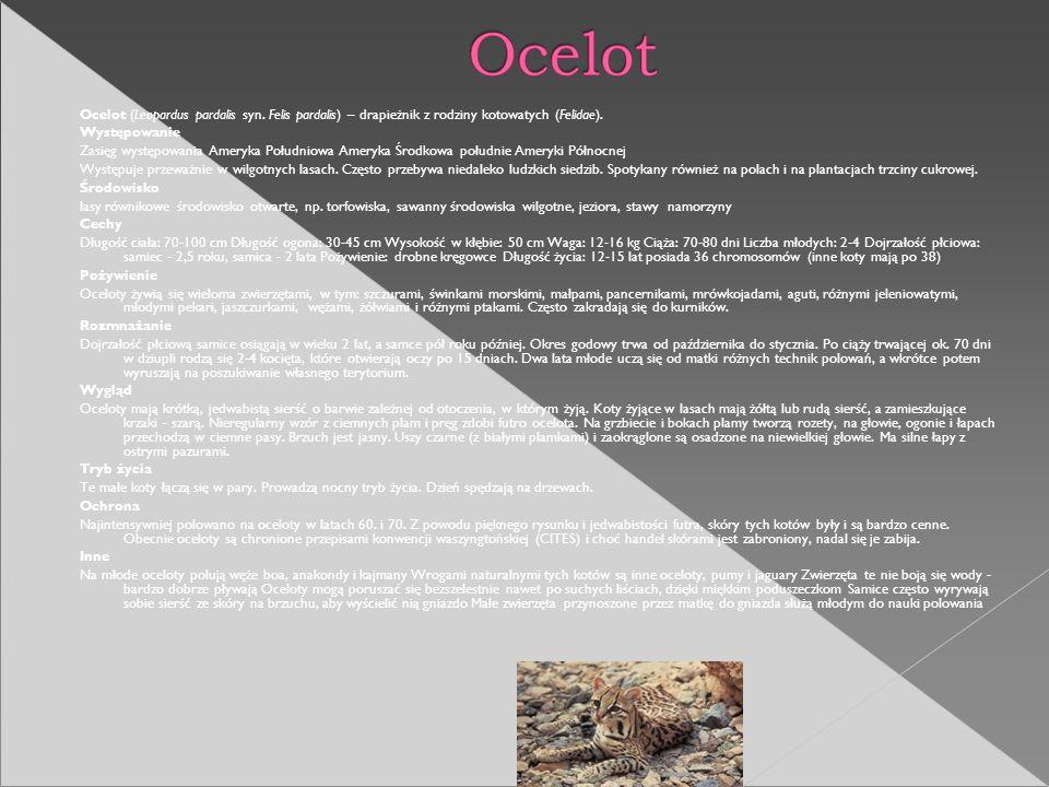 Ocelot (Leopardus pardalis syn. Felis pardalis) – drapieżnik z rodziny kotowatych (Felidae). Występowanie Zasięg występowania Ameryka Południowa Amery