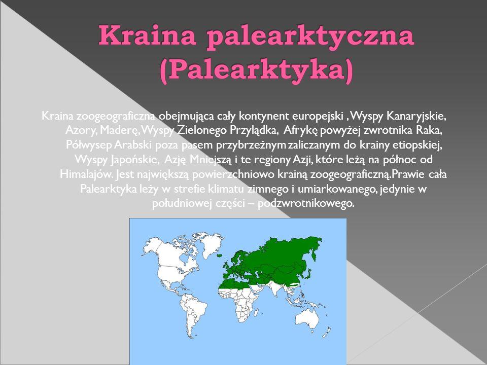 Fauna tego obszaru jest bardzo bogata i wykazuje duże podobieństwo do występującej w krainie palearktycznej i etiopskiej.