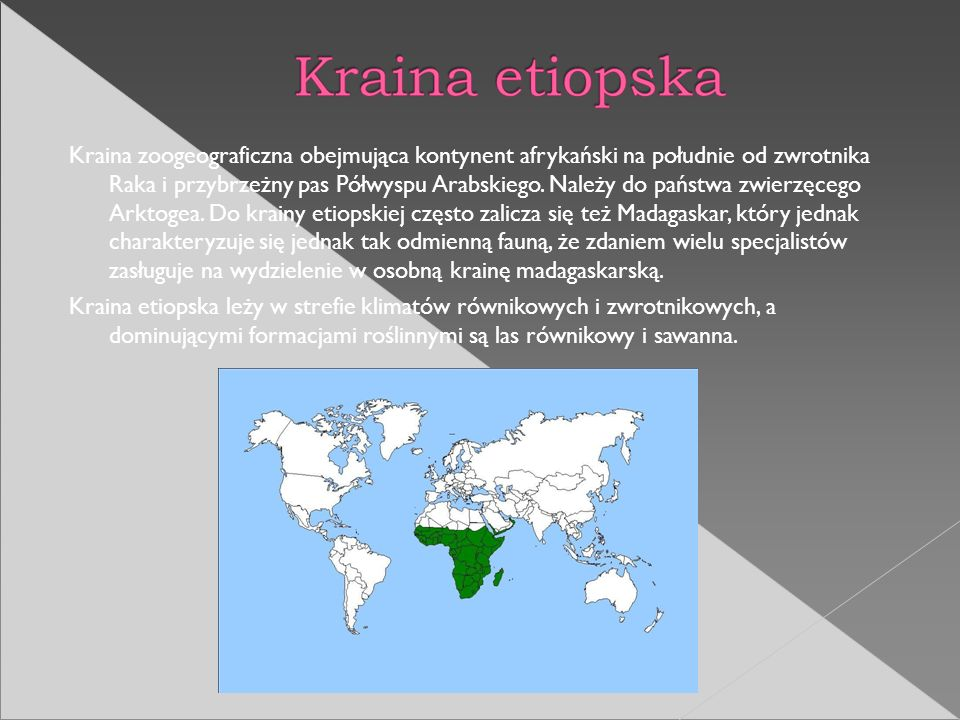 Kraina zoogeograficzna obejmująca kontynent afrykański na południe od zwrotnika Raka i przybrzeżny pas Półwyspu Arabskiego. Należy do państwa zwierzęc