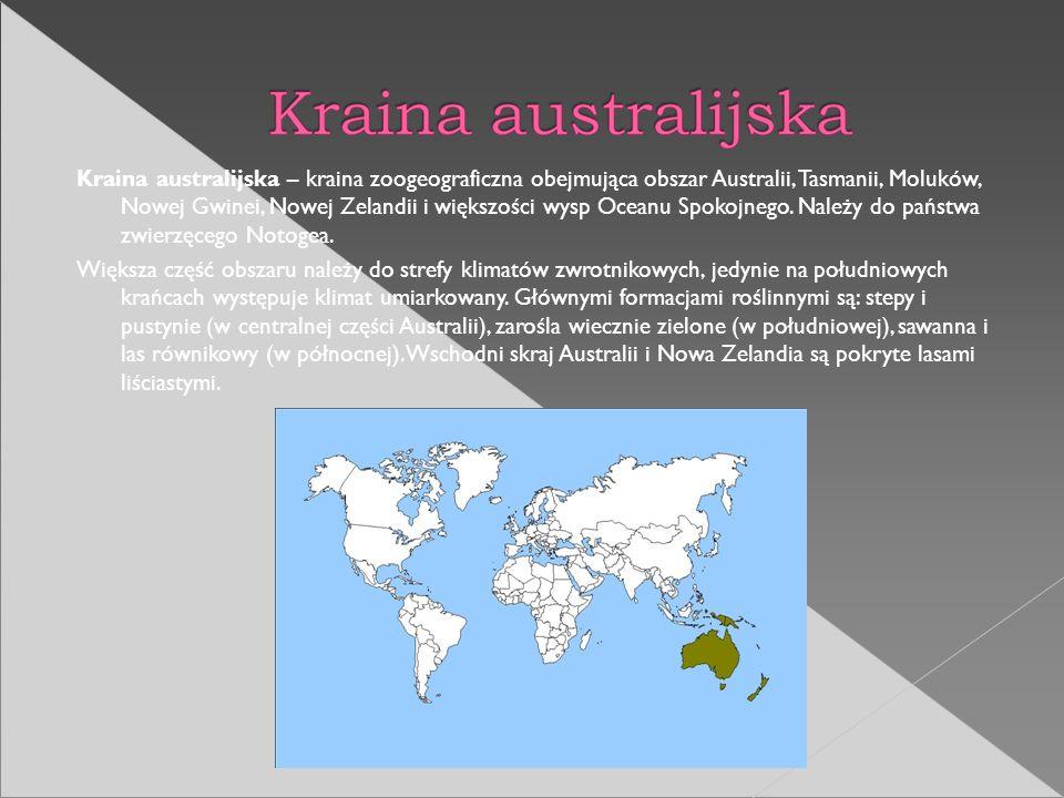 Kraina australijska – kraina zoogeograficzna obejmująca obszar Australii, Tasmanii, Moluków, Nowej Gwinei, Nowej Zelandii i większości wysp Oceanu Spo