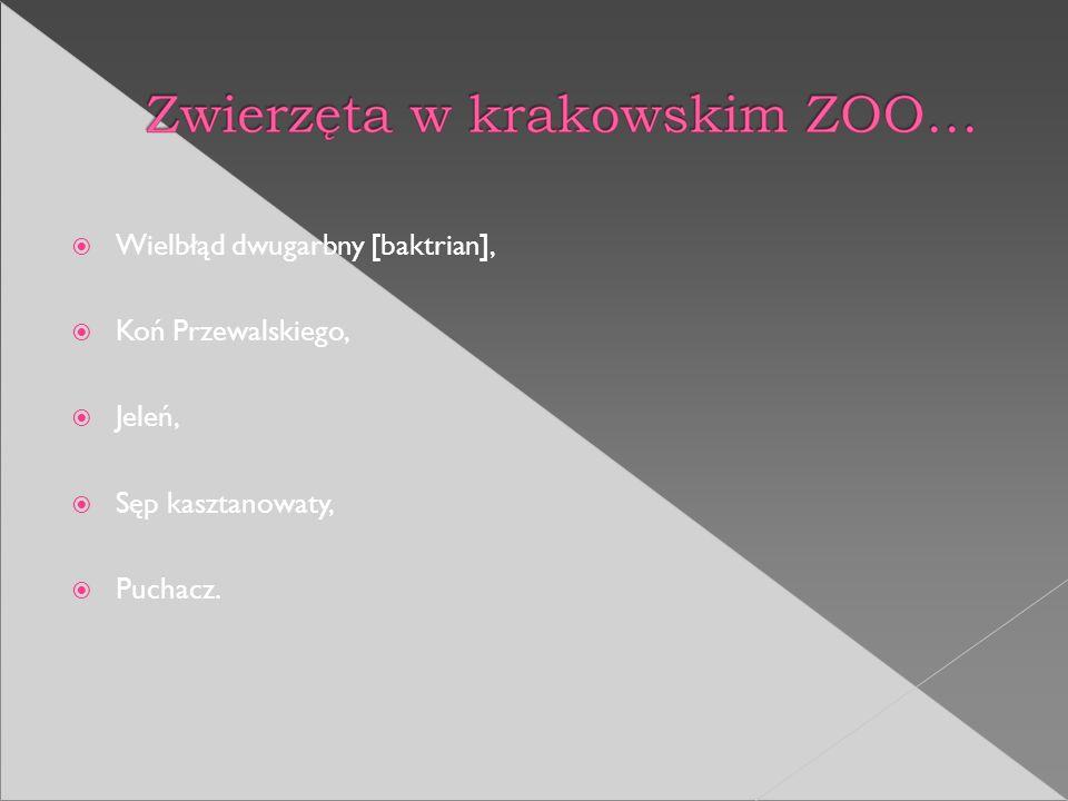 Wielbłąd dwugarbny [baktrian], Koń Przewalskiego, Jeleń, Sęp kasztanowaty, Puchacz.