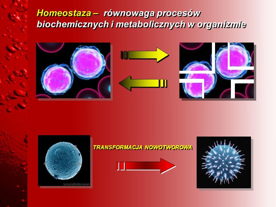 Homeostaza – równowaga procesów biochemicznych i metabolicznych w organizmie TRANSFORMACJA NOWOTWOROWA