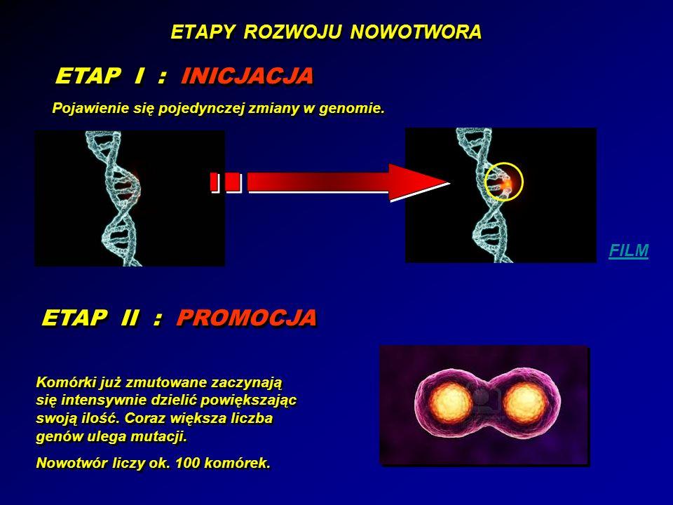 ETAPY ROZWOJU NOWOTWORA ETAP I : INICJACJA Pojawienie się pojedynczej zmiany w genomie. FILM ETAP II : PROMOCJA Komórki już zmutowane zaczynają się in
