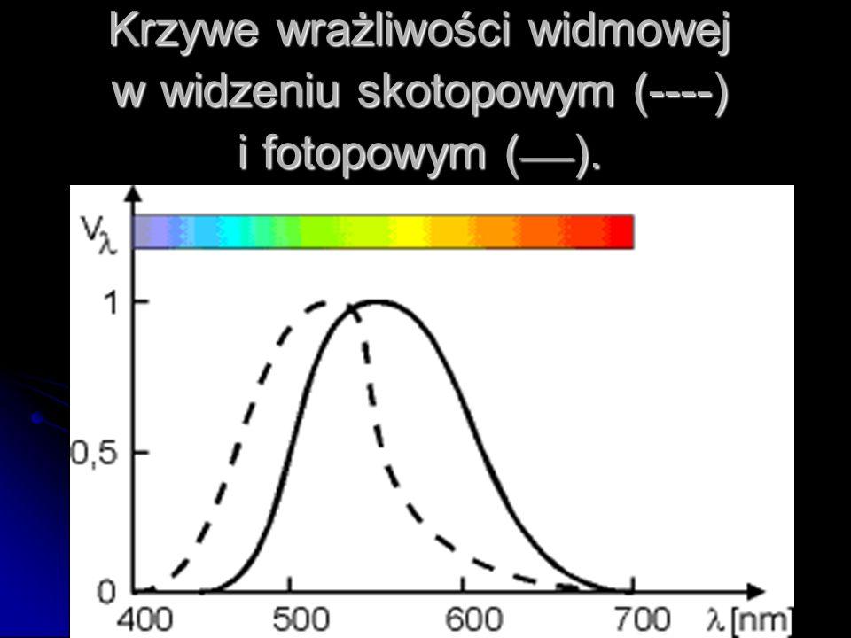 Krzywe wrażliwości widmowej w widzeniu skotopowym (----) i fotopowym ( ___ ).