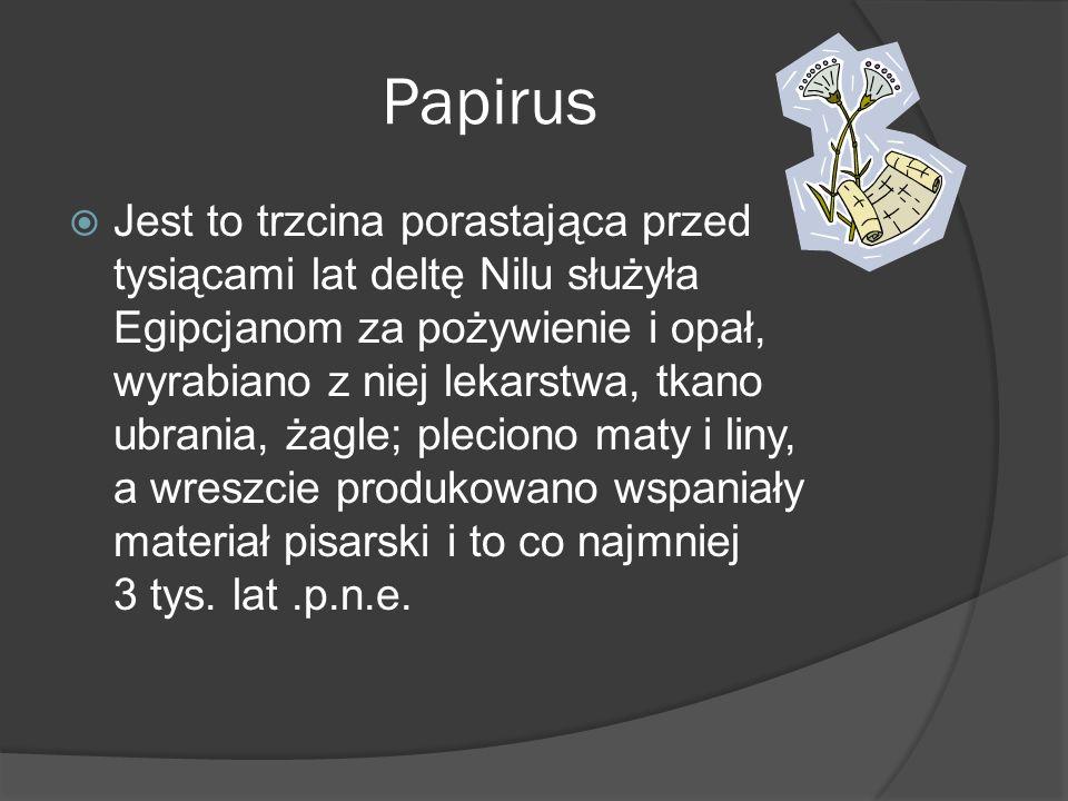 Papirus Jest to trzcina porastająca przed tysiącami lat deltę Nilu służyła Egipcjanom za pożywienie i opał, wyrabiano z niej lekarstwa, tkano ubrania,