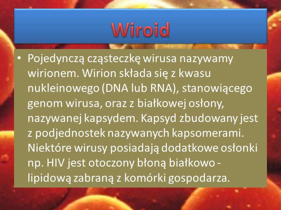 Pojedynczą cząsteczkę wirusa nazywamy wirionem.