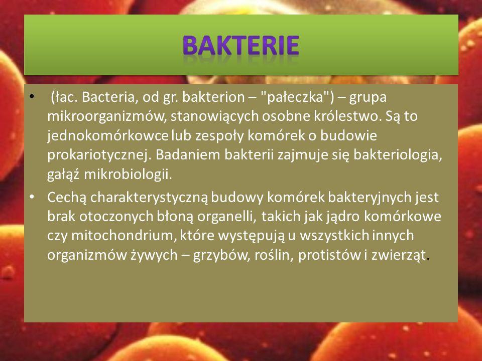 (łac.Bacteria, od gr.
