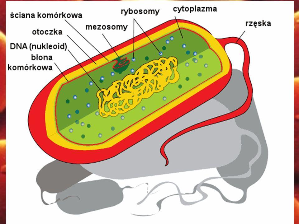 Rodzaj Gram-ujemnych bakterii o kształcie pałeczkowatym z rzędu Rickettsiales.