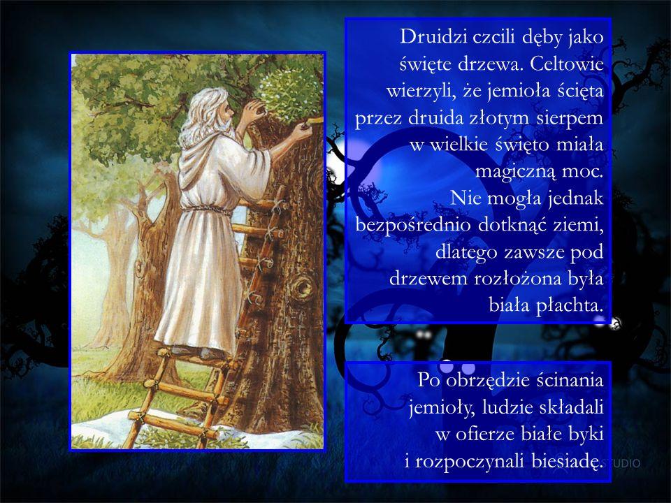Druidzi czcili dęby jako święte drzewa. Celtowie wierzyli, że jemioła ścięta przez druida złotym sierpem w wielkie święto miała magiczną moc. Nie mogł