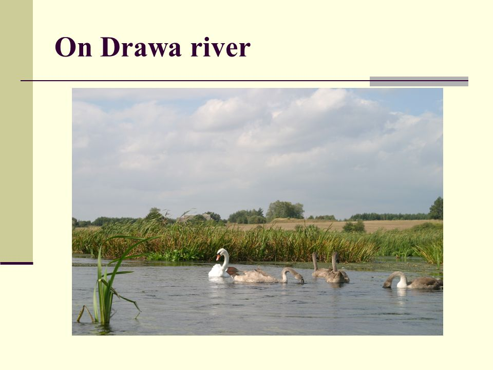 On Drawa river