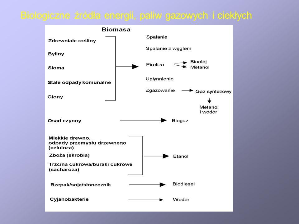 Wytwarzanie wodoru w układach biologicznych Szlaki wytwarzania wodoru przez drobnoustroje fotosyntetyzujące a/ szlak bezpośredni; w warunkach niskiego poziomu siarki; b/ szlak pośredni c/ szlak z wykorzystaniem fotosystemu