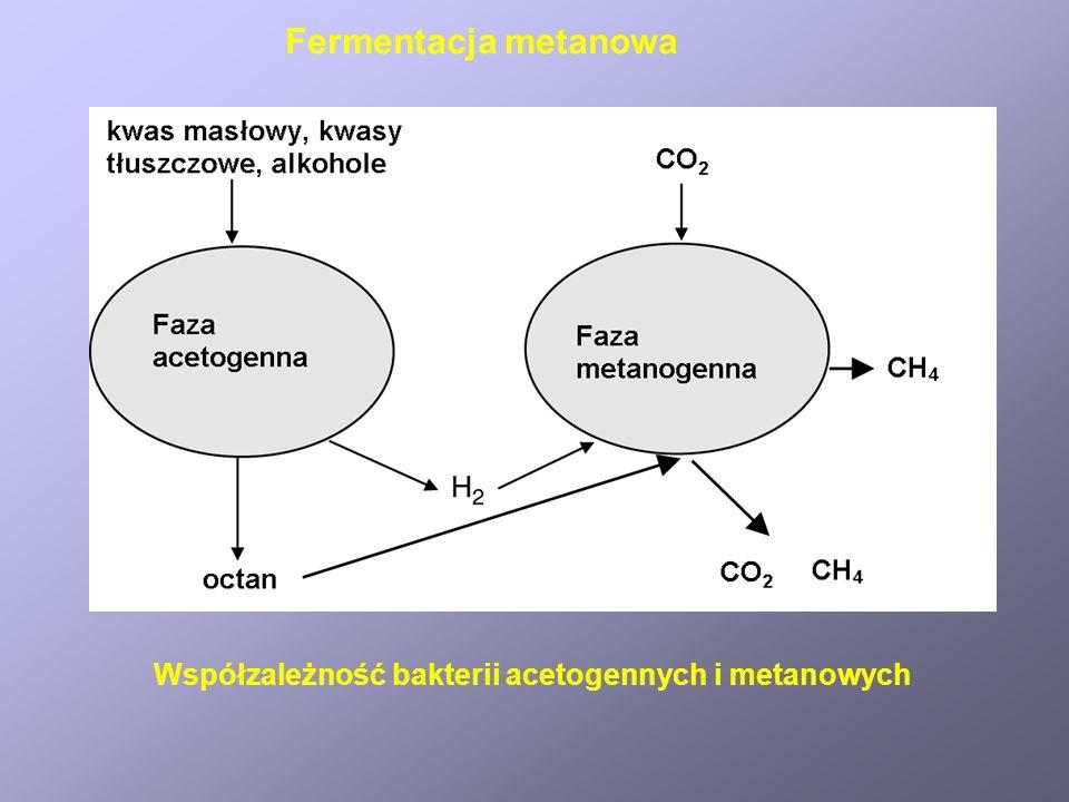 Transestryfikacja triacyloglicerydów Warunki: stosunek molowy metanol lub etanol: olej 6:1, kataliza alkaliczna (NaOH lub KOH), kwasowa (HCL lub H2SO4), lub enzymatyczna (lipaza).
