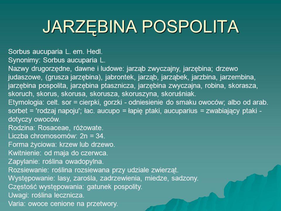 JARZĘBINA POSPOLITA Sorbus aucuparia L. em. Hedl. Synonimy: Sorbus aucuparia L. Nazwy drugorzędne, dawne i ludowe: jarząb zwyczajny, jarzębina; drzewo