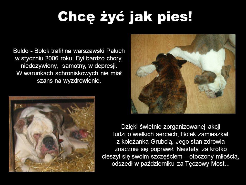 Chcę żyć jak pies. Buldo - Bolek trafił na warszawski Paluch w styczniu 2006 roku.