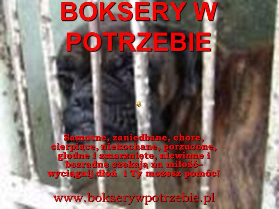 www.bokserywpotrzebie.pl Samotne i skrzywdzone