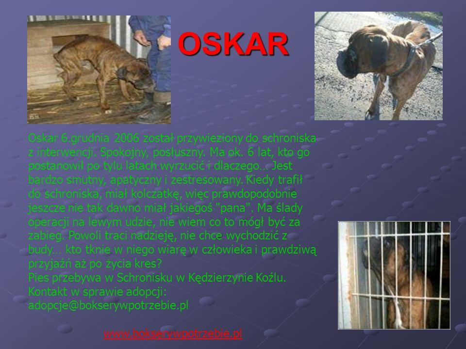 OSKAR Oskar 6.grudnia 2006 został przywieziony do schroniska z interwencji. Spokojny, posłuszny. Ma ok. 6 lat, kto go postanowił po tylu latach wyrzuc