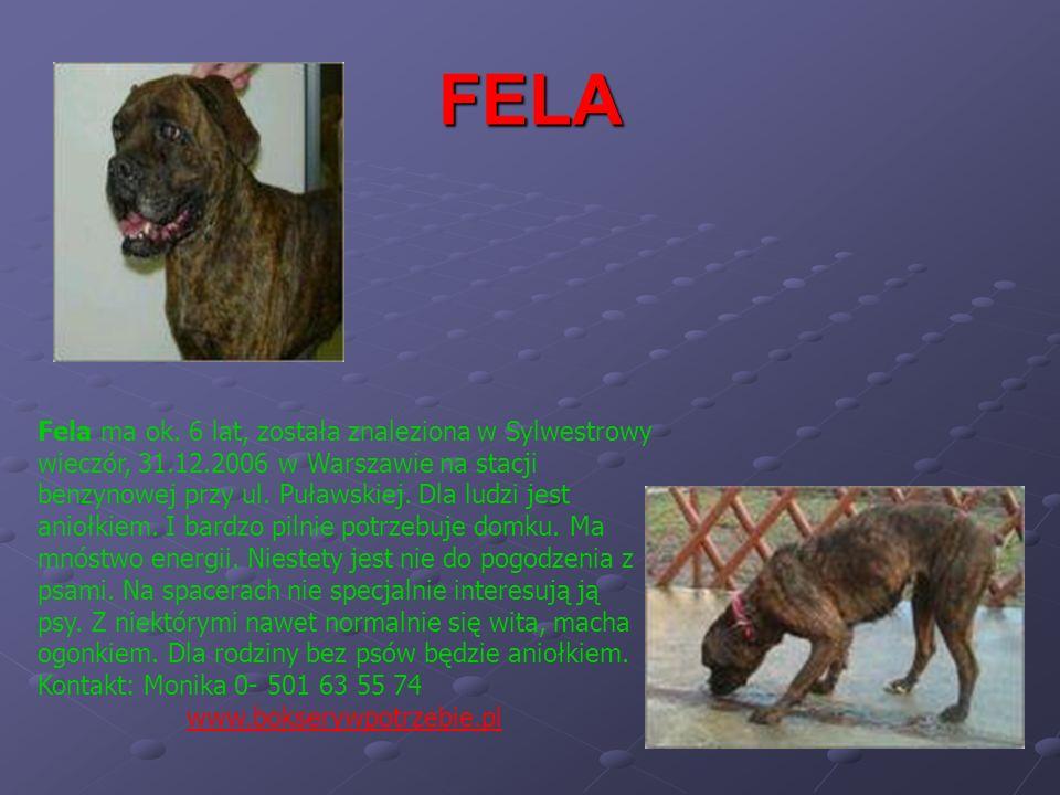 FELA Fela ma ok. 6 lat, została znaleziona w Sylwestrowy wieczór, 31.12.2006 w Warszawie na stacji benzynowej przy ul. Puławskiej. Dla ludzi jest anio