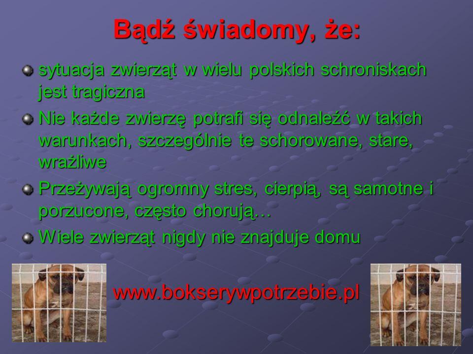 Bądź świadomy, że: sytuacja zwierząt w wielu polskich schroniskach jest tragiczna Nie każde zwierzę potrafi się odnaleźć w takich warunkach, szczególn