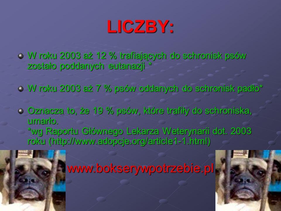 LICZBY: W roku 2003 aż 12 % trafiających do schronisk psów zostało poddanych eutanazji * W roku 2003 aż 7 % psów oddanych do schronisk padło* Oznacza