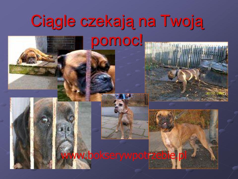 Ciągle czekają na Twoją pomoc! www.bokserywpotrzebie.pl