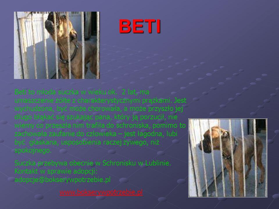 BETI Beti to młoda suczka w wieku ok. 2 lat, ma umaszczenie żółte z charakterystycznymi prążkami. Jest wychudzona, być może chorowała, a może przyszło