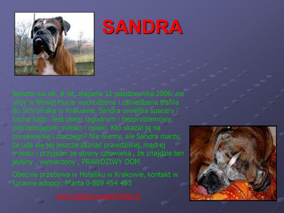 SANDRA Sandra ma ok. 8 lat, złapana 11 października 2006r na ulicy w Nowej Hucie wychudzona i zaniedbana trafiła do Schroniska w Krakowie. Sandra uwie
