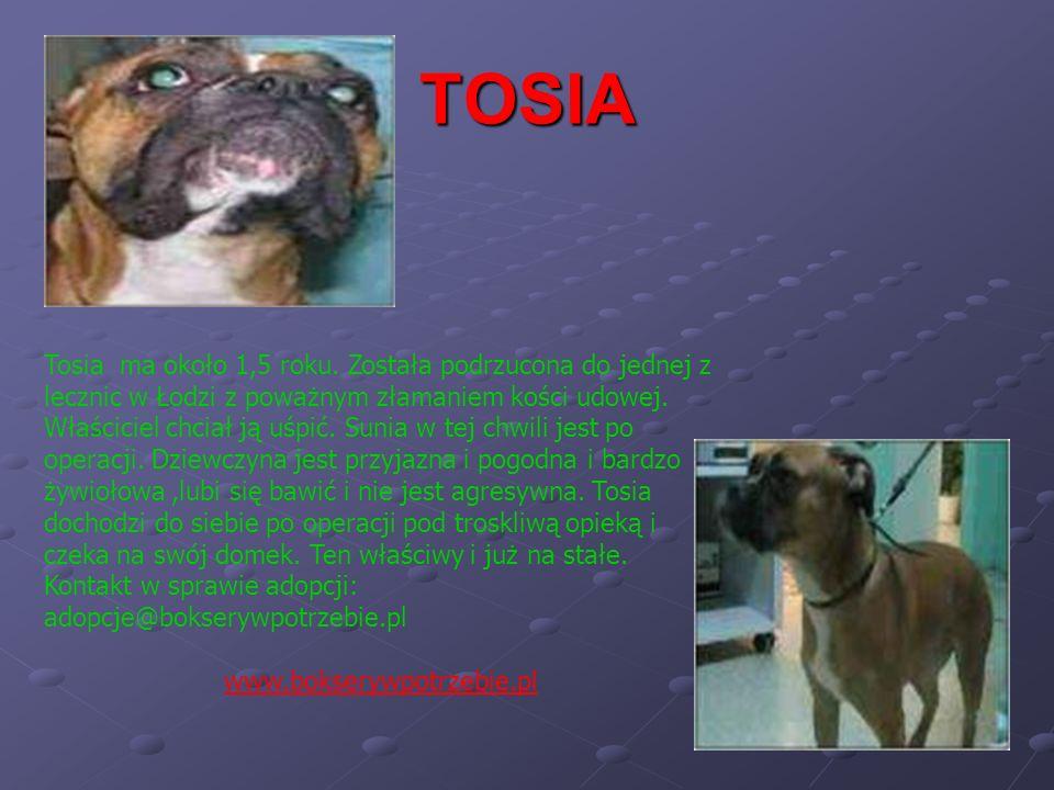 TOSIA Tosia ma około 1,5 roku. Została podrzucona do jednej z lecznic w Łodzi z poważnym złamaniem kości udowej. Właściciel chciał ją uśpić. Sunia w t