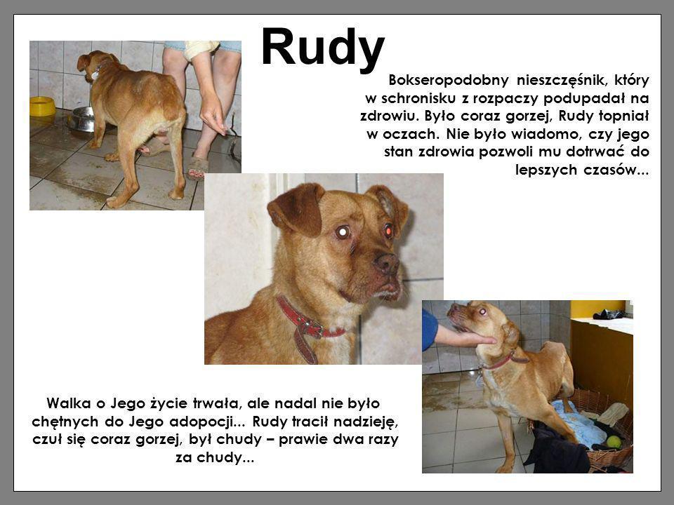 Rudy Bokseropodobny nieszczęśnik, który w schronisku z rozpaczy podupadał na zdrowiu. Było coraz gorzej, Rudy topniał w oczach. Nie było wiadomo, czy