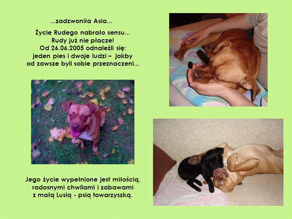 ...zadzwoniła Asia... Życie Rudego nabrało sensu... Rudy już nie płacze! Od 26.06.2005 odnaleźli się: jeden pies i dwoje ludzi – jakby od zawsze byli