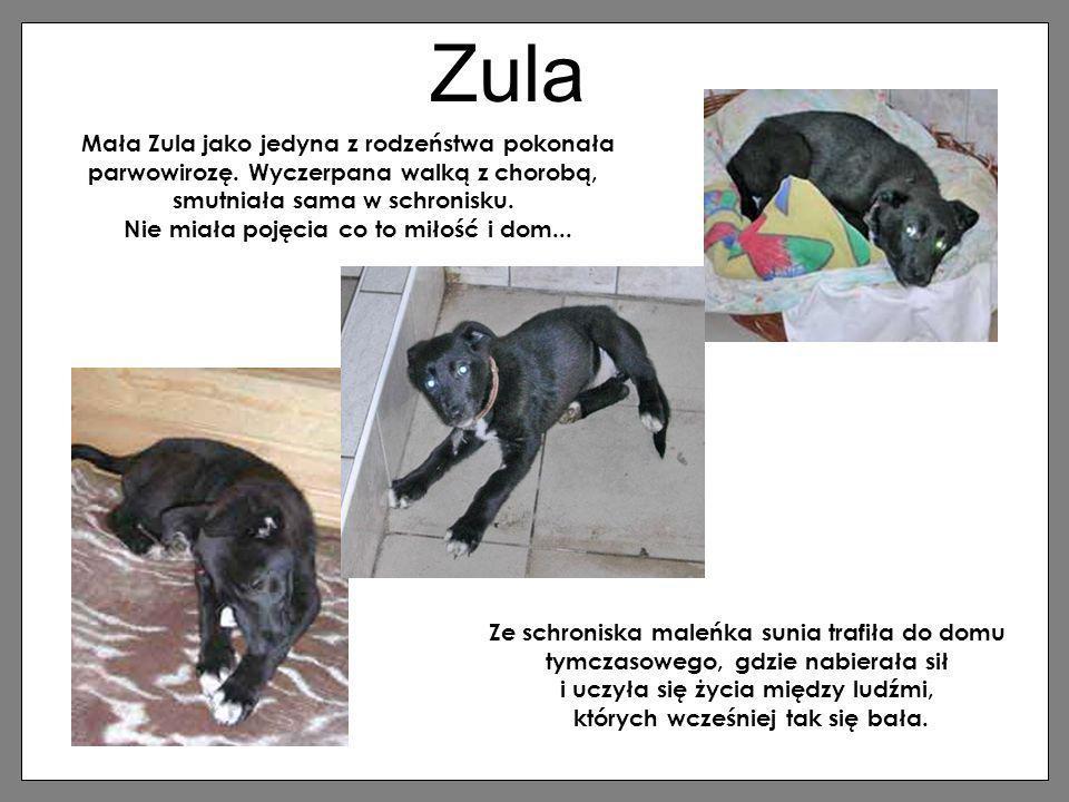 Zula Mała Zula jako jedyna z rodzeństwa pokonała parwowirozę. Wyczerpana walką z chorobą, smutniała sama w schronisku. Nie miała pojęcia co to miłość
